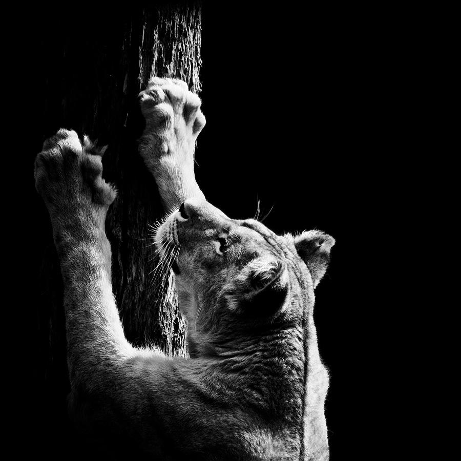 Dark Zoo - Nicolas Evariste